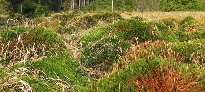 Lesní mýtina